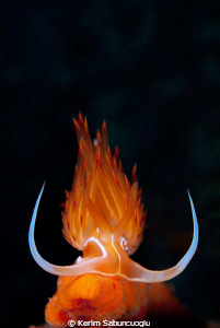 underwater flame by Kerim Sabuncuoglu 